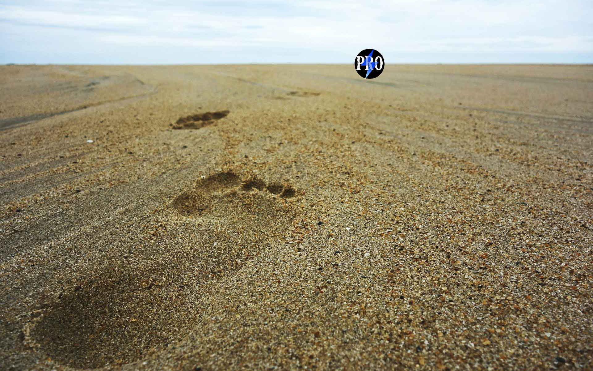 footsteps-amp-pro